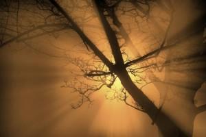 ghost_tree